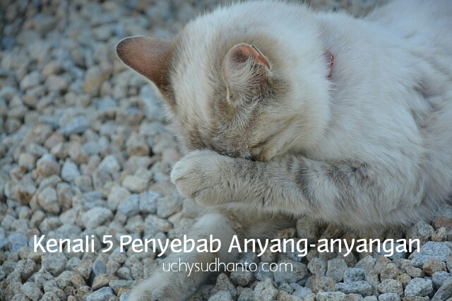 anyang-anyangan uchy sudhanto's blog